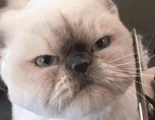 Не делайте мне нервы: 10 примеров кошачьей невозмутимости (14 фото)