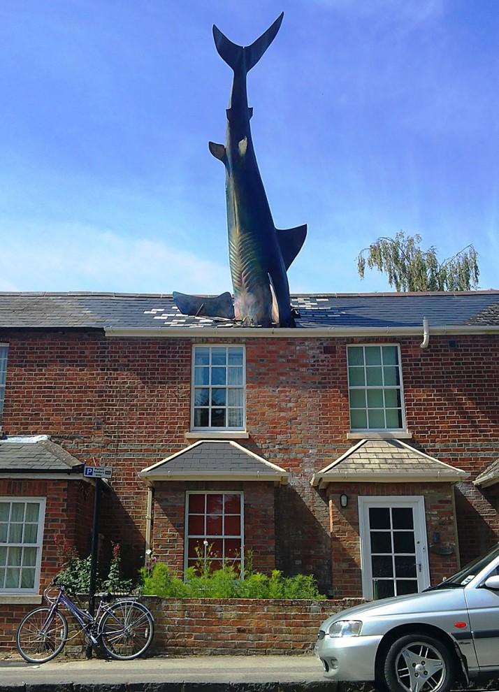 Акула. Оксфорд, Великобритания.