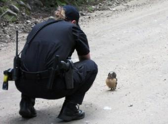 Полицейские впервые столкнулись с пернатым правонарушителем