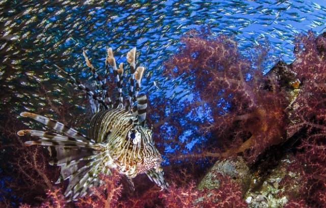 подводный мир рис 9