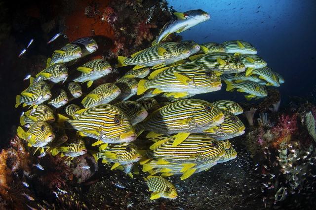 подводный мир рис 2