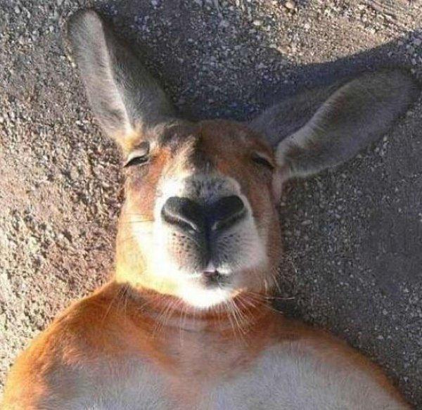 Animal-selfies-04