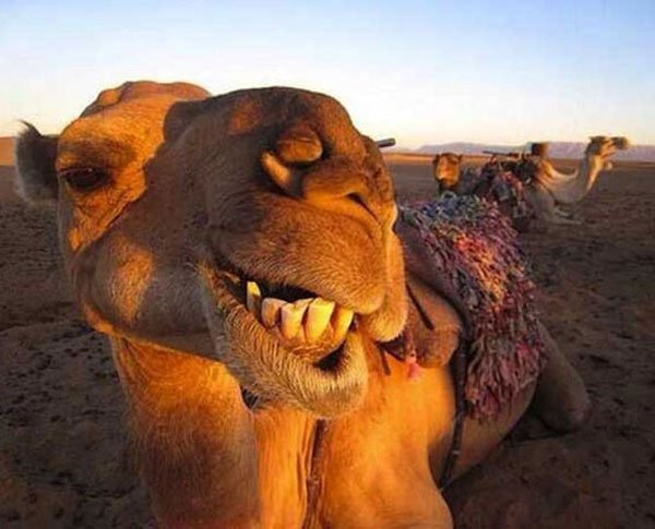 Animal-selfies-15