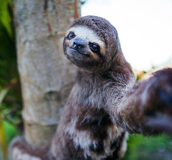 Animal-selfies-26
