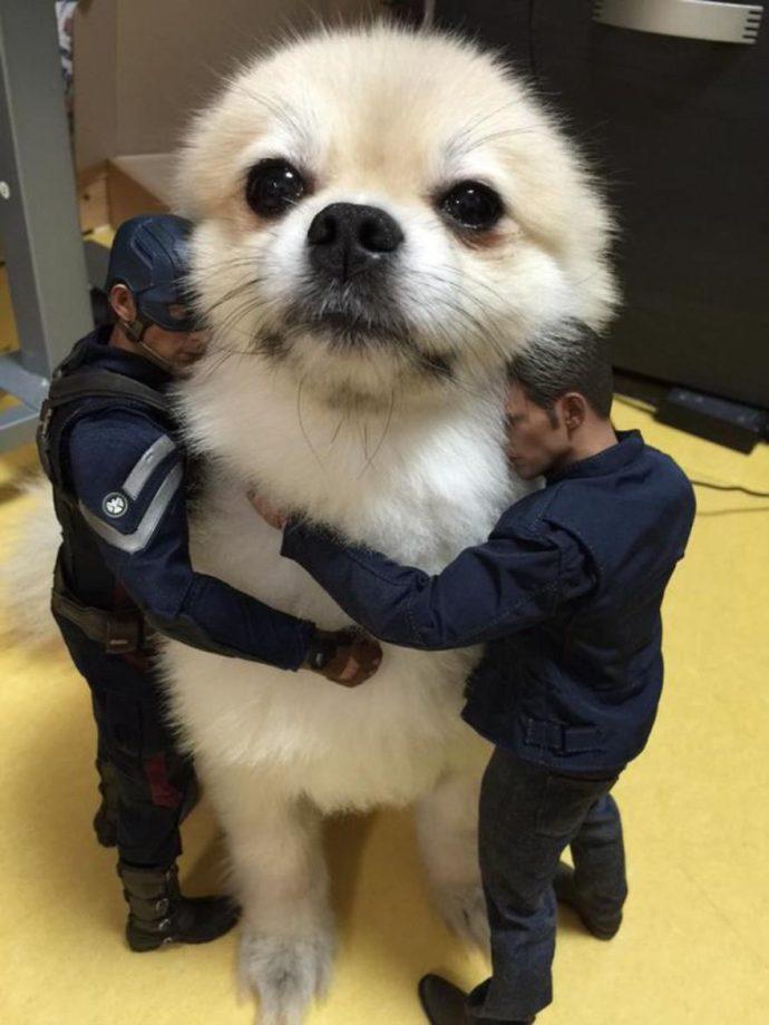 optical-illusion-giant-dog-51__880