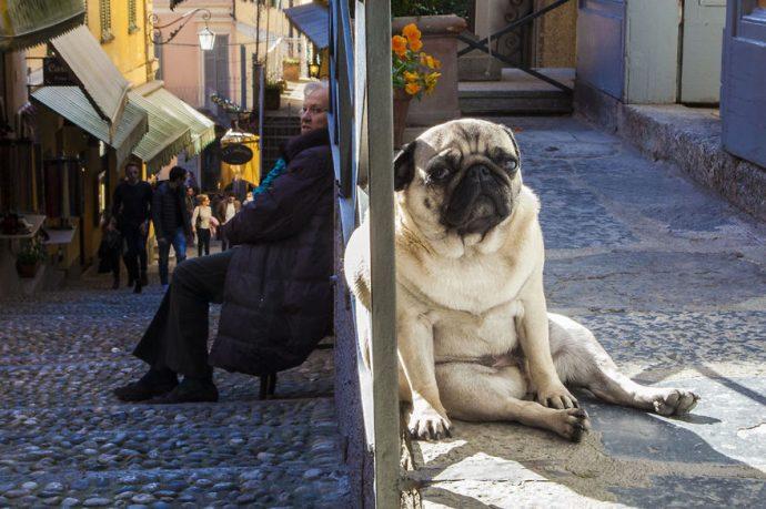 optical-illusion-giant-dog-91__880