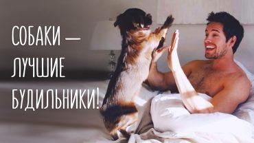 Собаки — лучшие будильники!