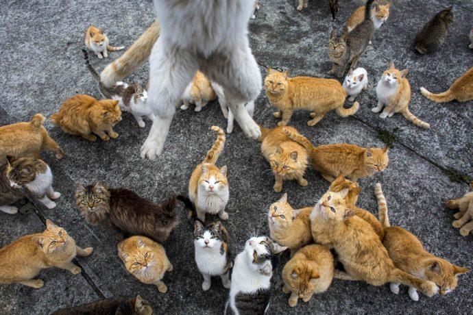 Кот прыгает на туриста, чтобы урвать кусочек угощения