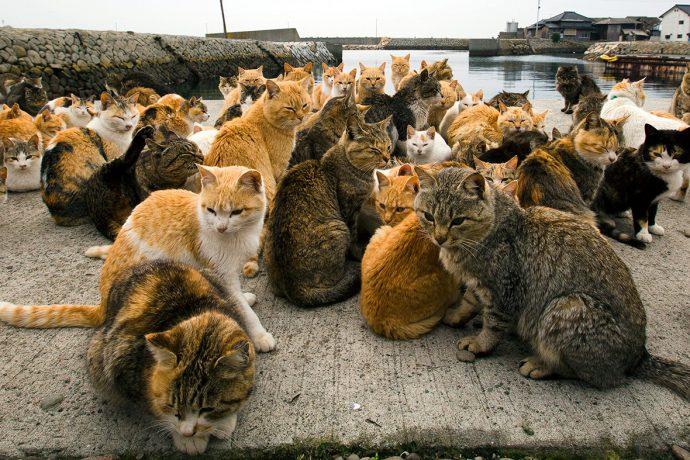 Не наступите на кота! Остров в Японии переполнен пушистиками! рис 3