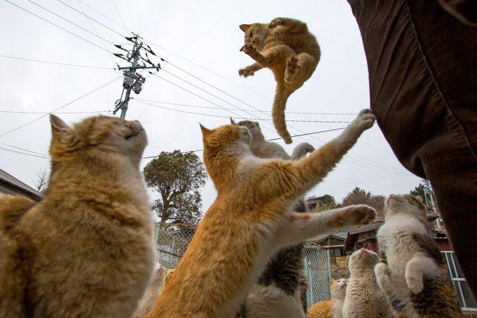 Коты выпрашивают корм у посетителей