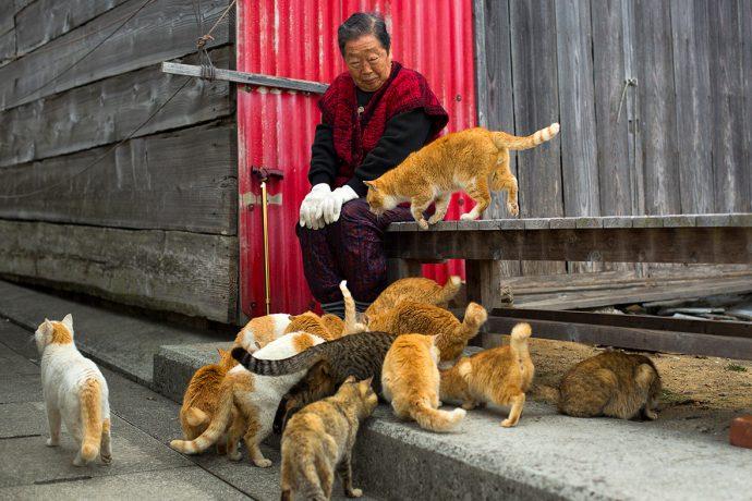 Не наступите на кота! Остров в Японии переполнен пушистиками! рис 4