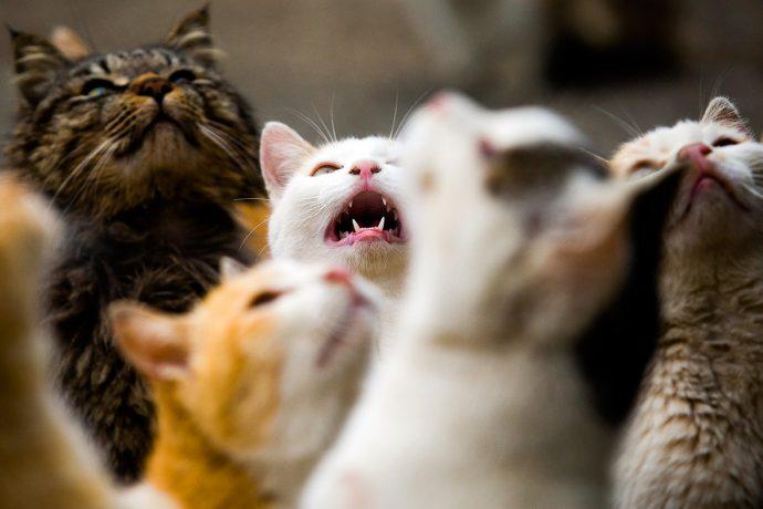 Не наступите на кота! Остров в Японии переполнен пушистиками! рис 2