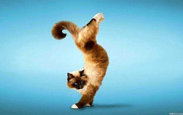 dancing_cat-982029