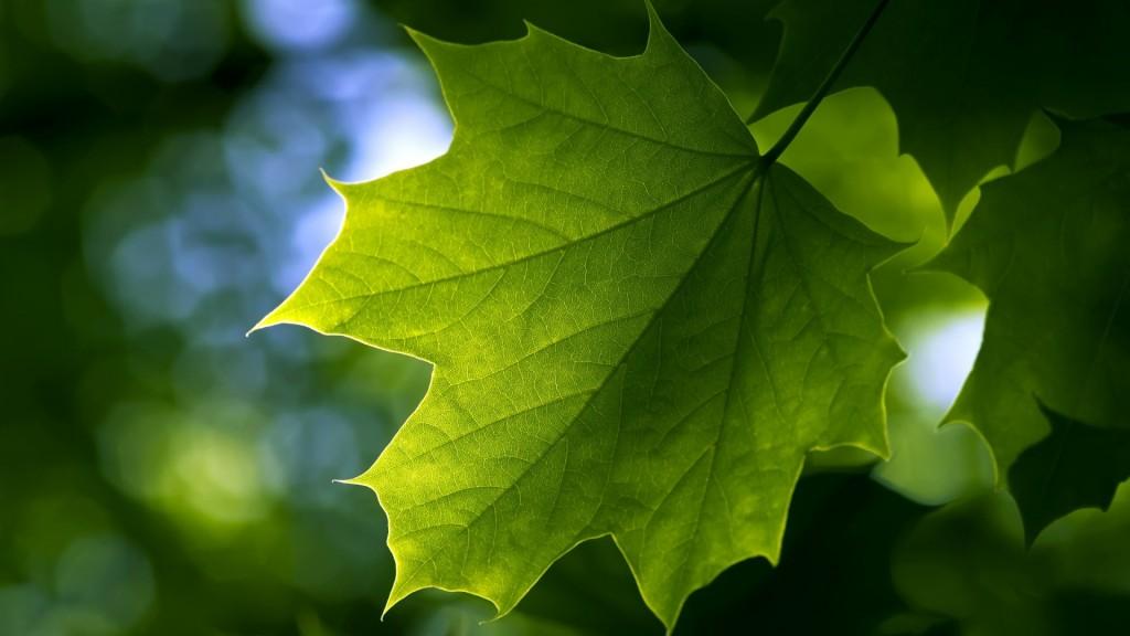 gandex.ru-26_1391_summer-leaf