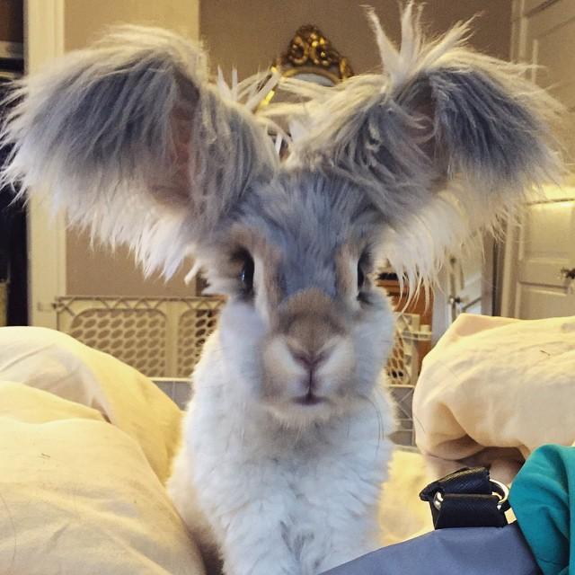 Самый няшный кролик в Интернете! Знакомьтесь, Волли!