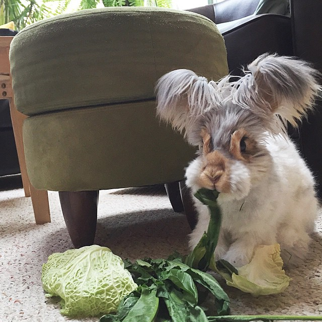 Самый няшный кролик в Интернете! Знакомьтесь, Волли! рис 4