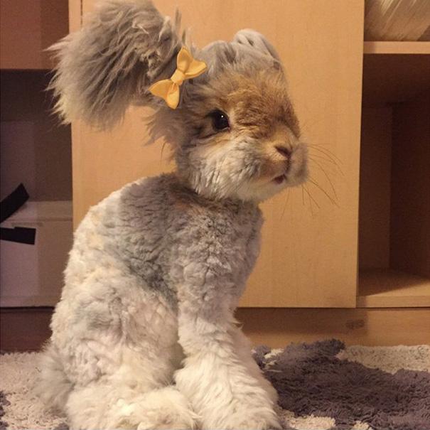 Самый няшный кролик в Интернете! Знакомьтесь, Волли! рис 5
