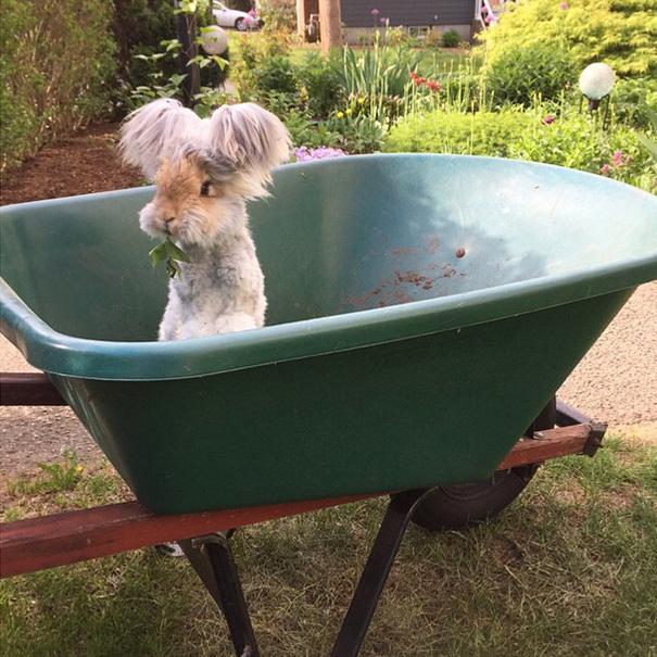 Самый няшный кролик в Интернете! Знакомьтесь, Волли! рис 2