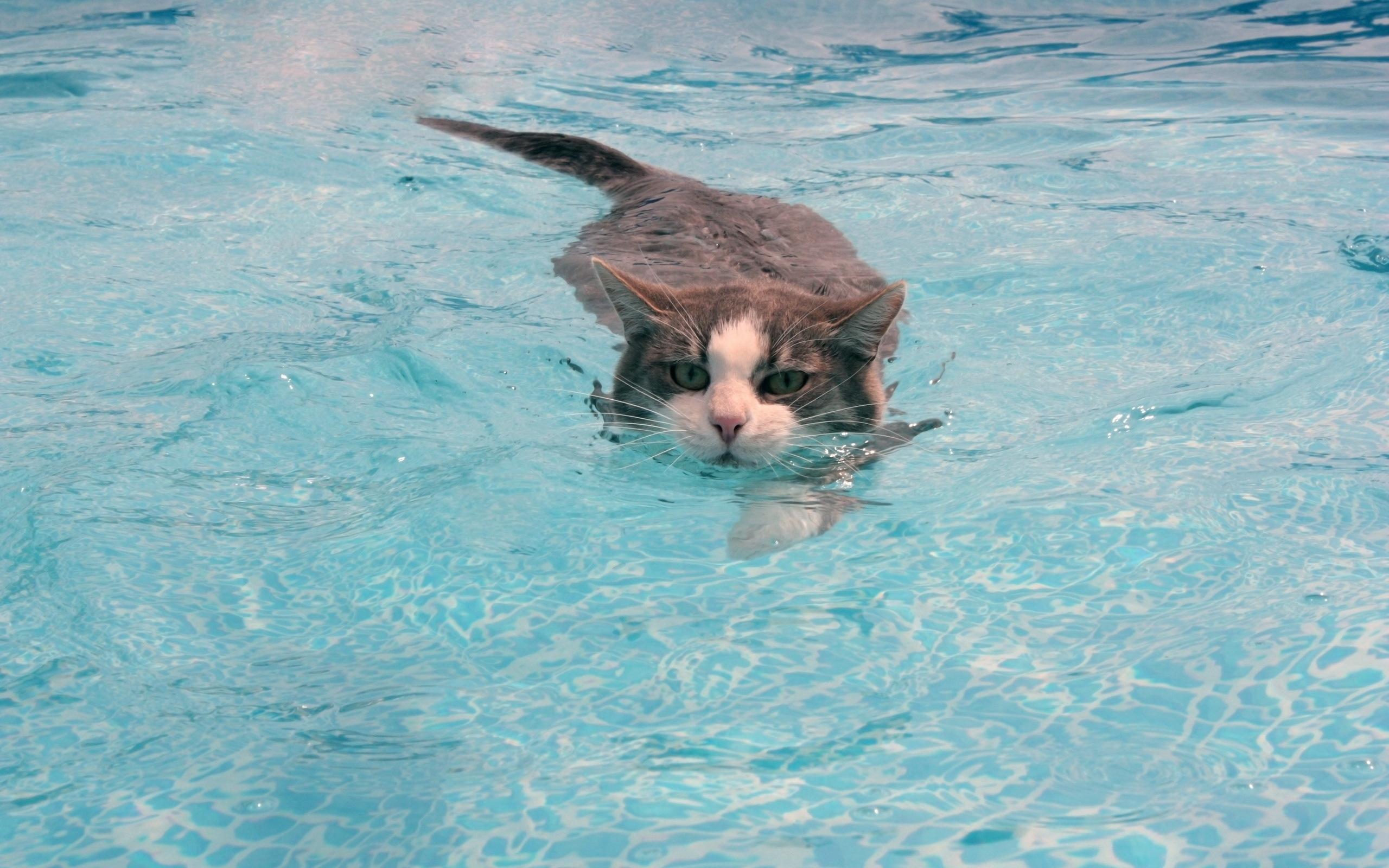 Кот плавает в воде