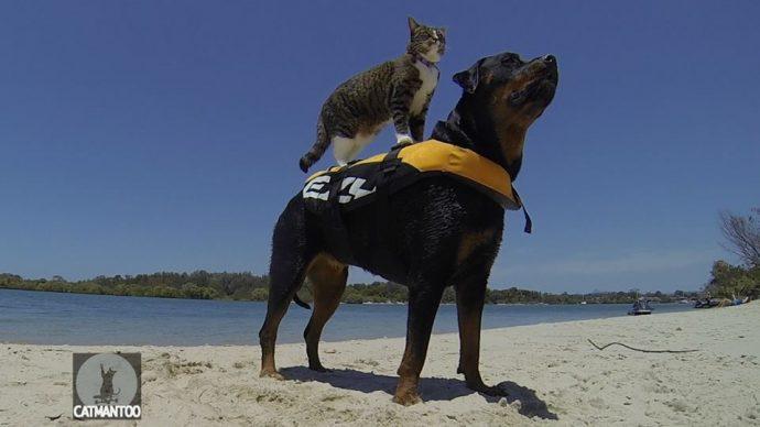 Диджа — уникальная кошка-скейтбордист рис 4