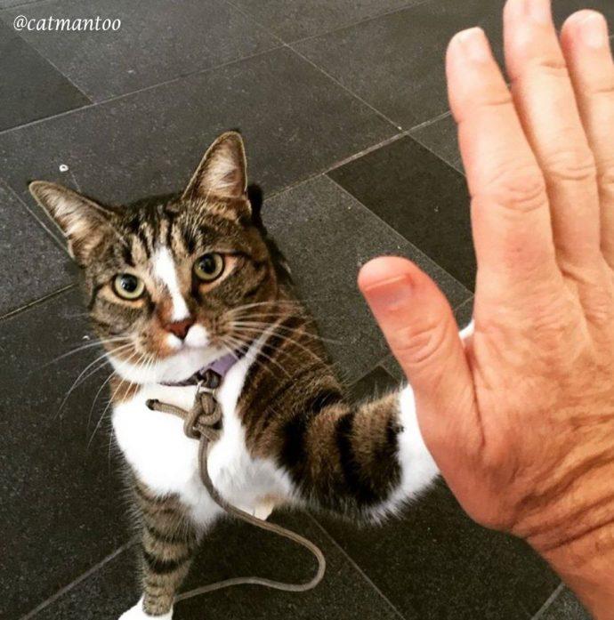 Диджа — уникальная кошка-скейтбордист