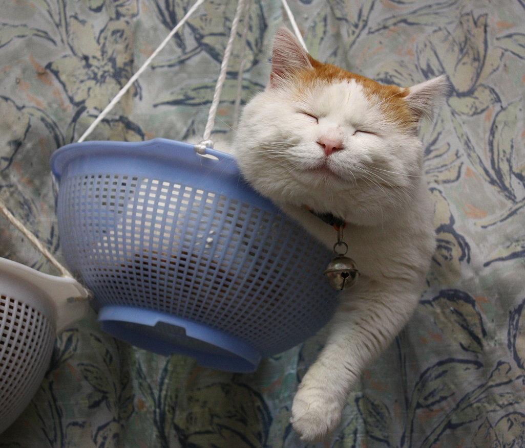 кот в корзинке рис 2