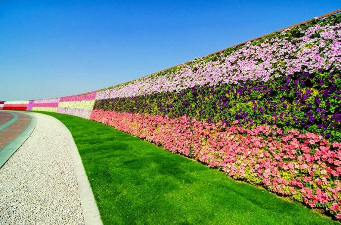 Dubai Miracle Garden рис 2