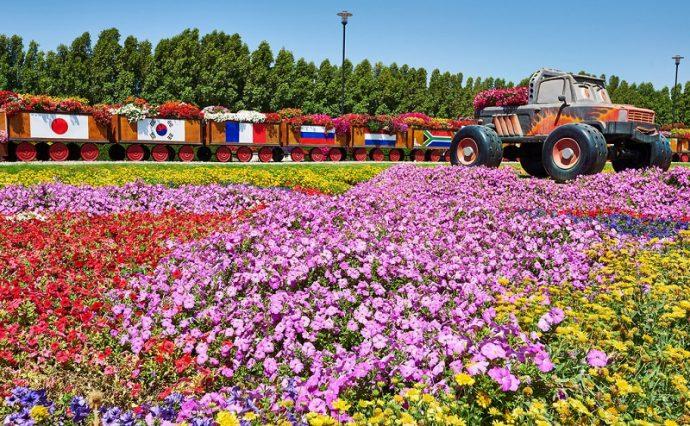 Цветочная поляна в парке цветов в Дубае