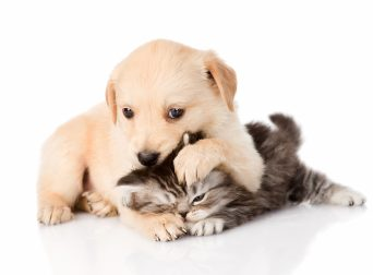 Dogs_Cats_Kittens_Puppy_416771