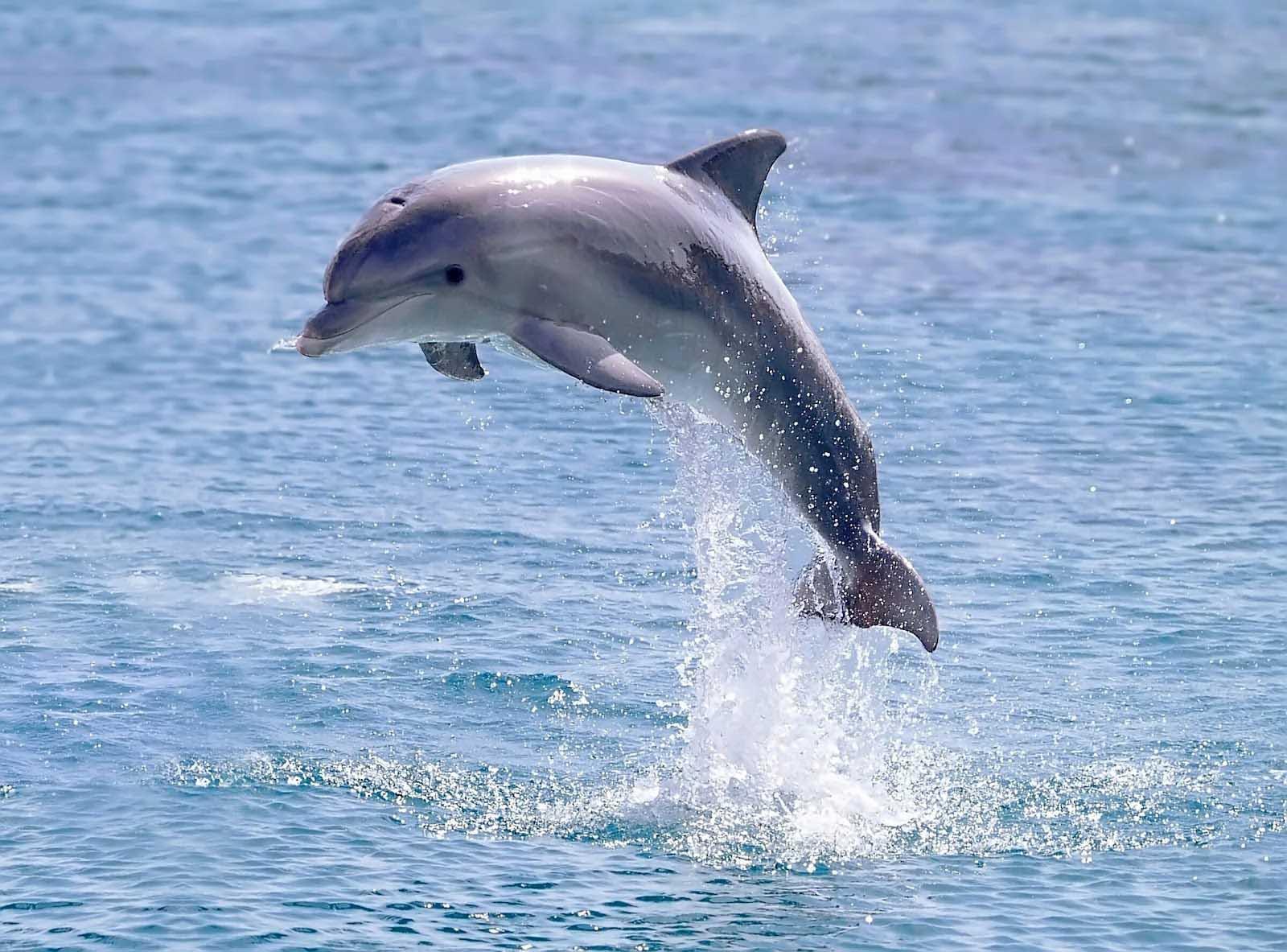 Доказательство того, что дельфины разумны рис 5