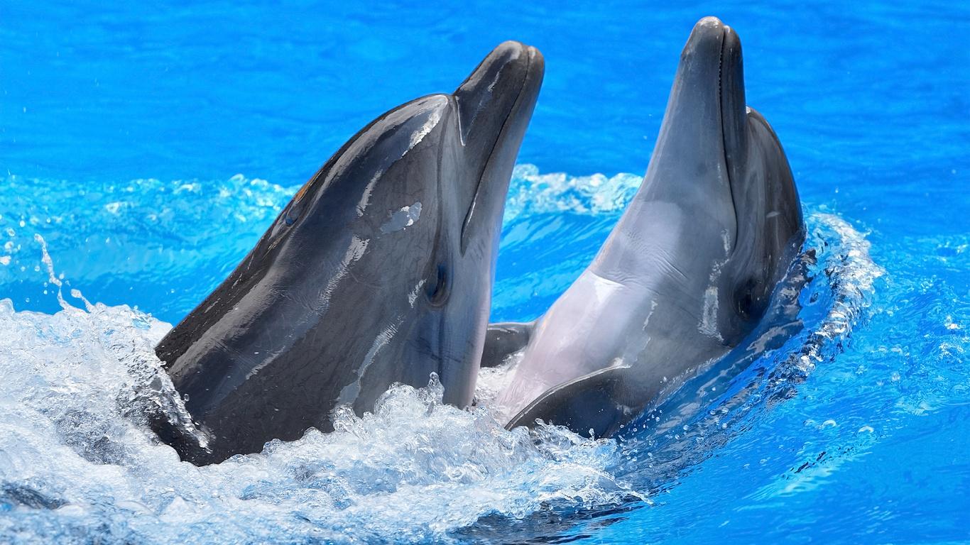 Доказательство того, что дельфины разумны рис 3