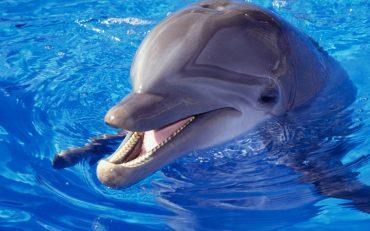dolphin-wallpaper-beautiful