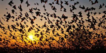 jatinga birds 2
