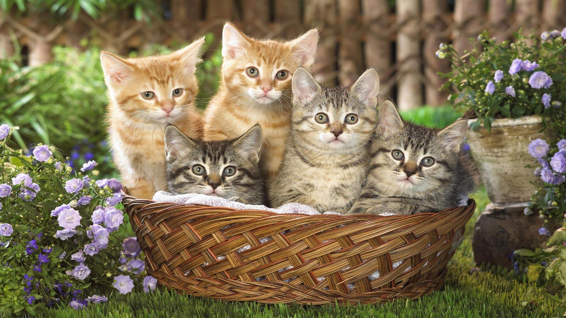 коты в корзине