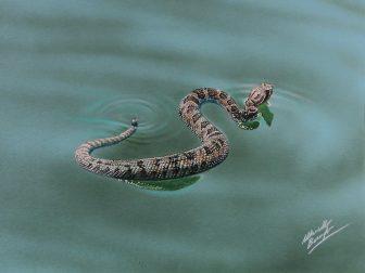 serpente2