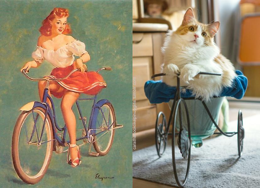 Пинап девушка и Кот на велосипедах