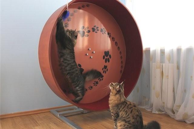 кошкин дом рис 5