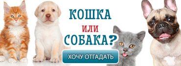 кот-или-собака