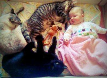 коты-няни