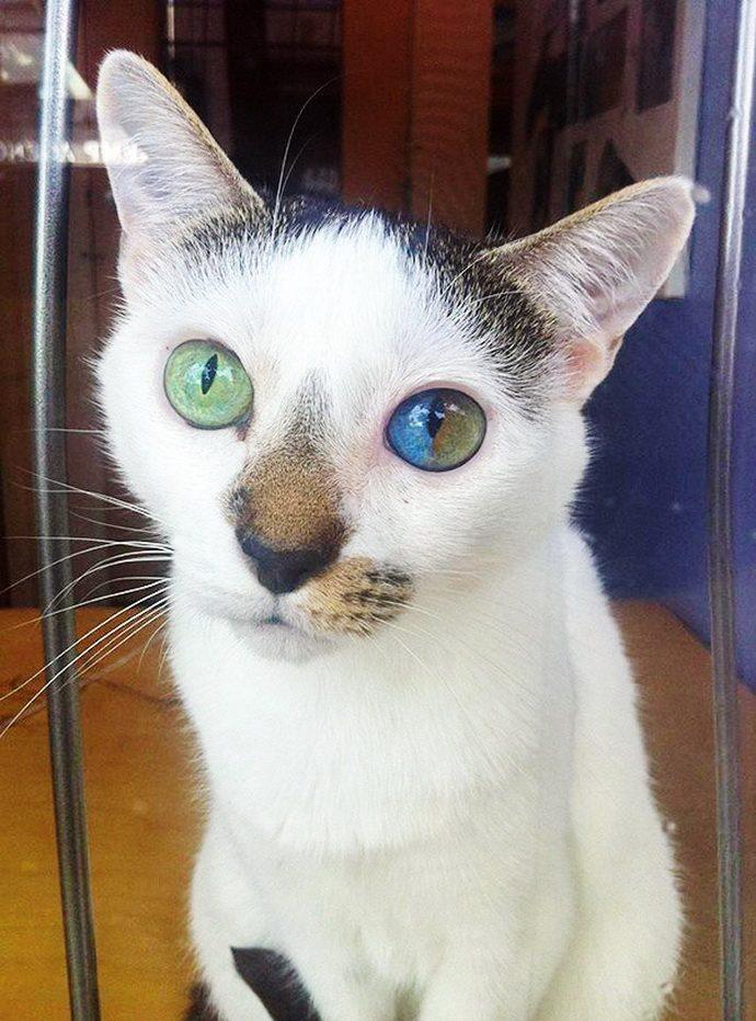 кошачий глаз рис 2