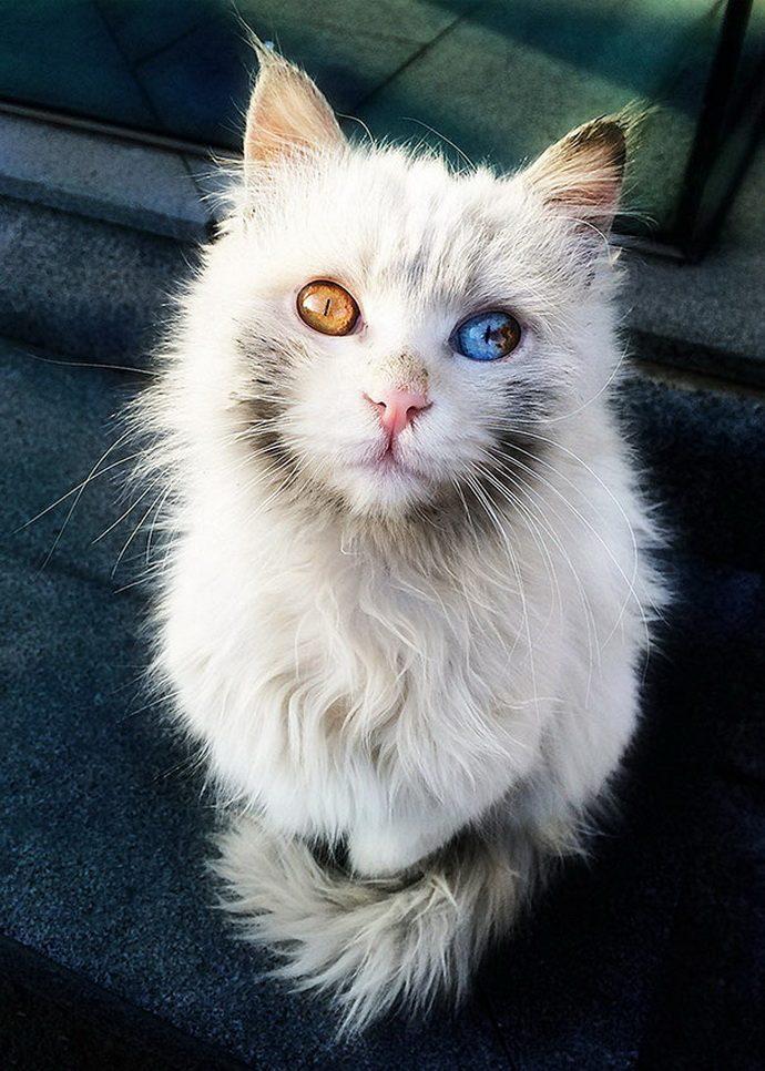 кошачий глаз рис 3