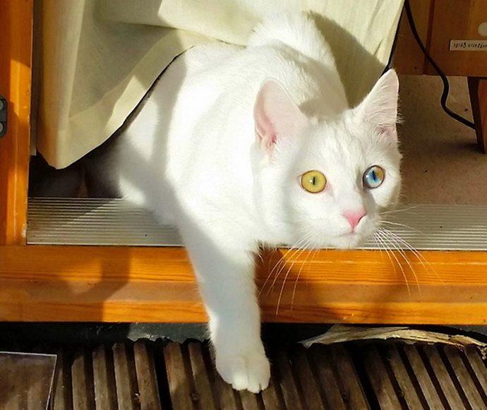 кошачий глаз рис 5