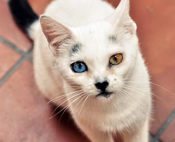 кошачий глаз рис 4