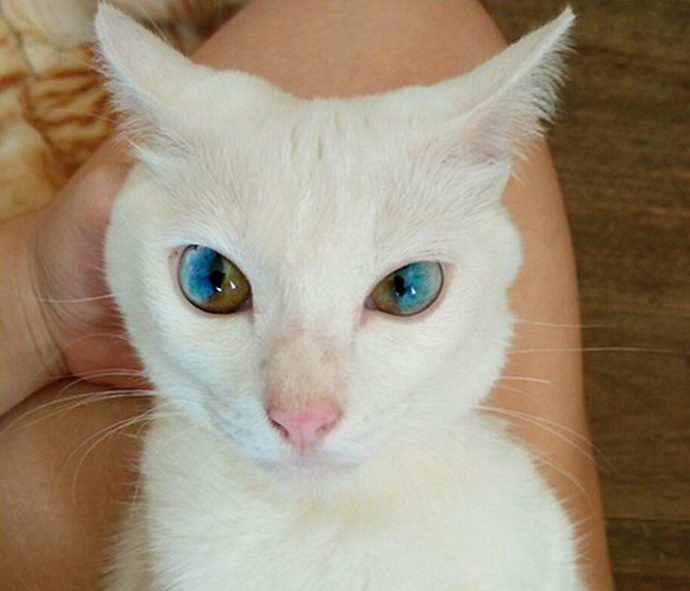 кошачий глаз рис 7