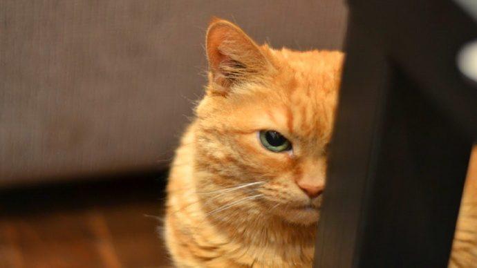 коварные коты