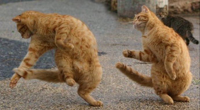 применение кота в домашних условиях
