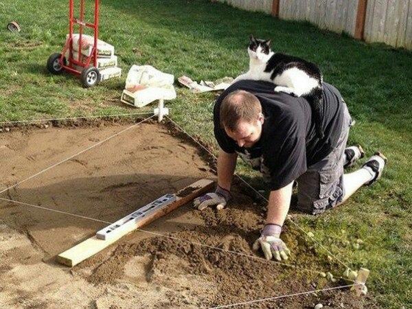 коты рис 7