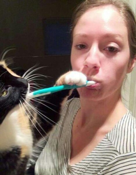 коты рис 3