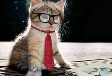 Кошачьи таланты