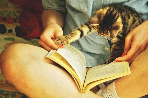 cat-books